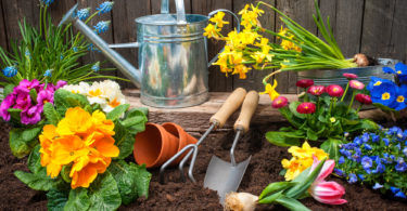 Planting flowers in pot with dirt or soil at back yard